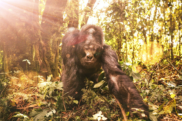 PRESERVING BIODIVERSITY IN THE CONGO